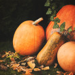 Pumpkins decoration on plant background — Стоковое фото #70272219
