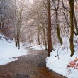 Creek in the forest covered with snow — Stock Photo #70273011