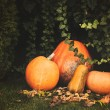 Pumpkins decoration on plant background — Стоковое фото #70273513
