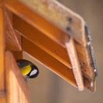 Titmouse sitting on trough — Stock Photo #70273713