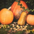 Pumpkins decoration on plant background — Стоковое фото #70274115