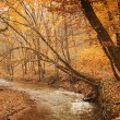 Brook in the autumn forest — Stock Photo #70274117