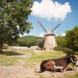 Old windmill in park — Stock Photo #70274161