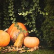 Pumpkins decoration on plant background — Стоковое фото #70274219