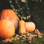 Pumpkins decoration on plant background — Стоковое фото #70274275