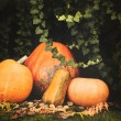 Pumpkins decoration on plant background — Стоковое фото #70274555