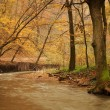 Brook in the autumn forest — Stock Photo #70274637