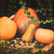 Pumpkins decoration on plant background — Стоковое фото #70275117