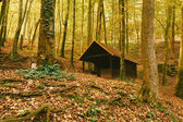 Wooden cabin in the forest — Stock Photo