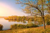 Autumn Trees near lake — Stock Photo