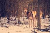 Female deer in forest — Stock Photo