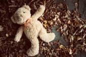 Teddy bear on leaves — Stock Photo