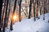 Amazing winter forest — Stock Photo