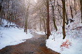 Creek in the forest covered with snow — Stock Photo
