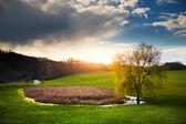 Willow near pond on spring — Stock Photo