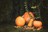 Pumpkins decoration on plant background — Stock fotografie