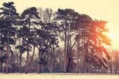 冬季在日落公园 — 图库照片