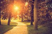 Beautiful autumn park — Foto de Stock