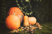 Pumpkins decoration on plant background — Stock Photo