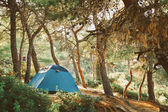 Camping in green forest — Stock Photo