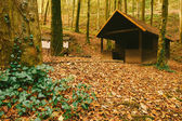 Cabin in the autumn forest — Stock fotografie