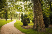 Footpath in the green park — Stock fotografie