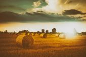 Bales on the field — Stock Photo