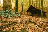 Cabin in the autumn forest — Stock Photo
