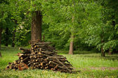 Wood stack on the forest — Stock Photo