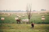 Horses on green, rural pasture — Stock Photo