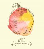 Fresh eco-friendly apple — Stock Vector