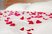 Rose petals on white bedding — Stock Photo