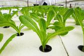 実生植物の成長 — ストック写真