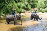Elephant bathing in the river — Stock Photo