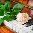 White rose on grand piano — Stock Photo #56584779