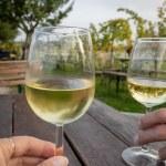 Tasting wine outdoor in a vineyard — Stock Photo #63999249