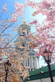 Kiev cathedrals in spring with sakura blooming — Stock Photo