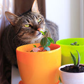 Curious cat and house plants — Stock Photo