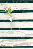 Garden Lily Over White Wooden Fence Background — Stock Photo