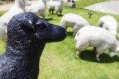 Black and white sheep statue — Stockfoto
