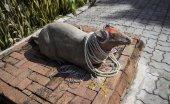Estatua de rata — Foto de Stock