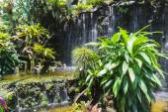 The rare plant near the cascade — Stock Photo