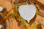 Silver metal sheet in bo leaf shape — Fotografia Stock