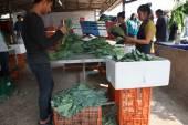 Leute schneiden teilweise Grünkohl vor dem Verkauf — Stockfoto