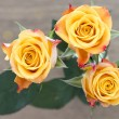 Yellow with red roses — Stock Photo #53595955