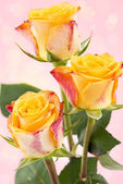 Yellow with red roses — Stok fotoğraf