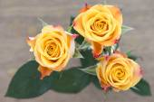 Yellow with red roses — Stock Photo