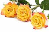 Yellow with red roses isolated on white — Stock fotografie