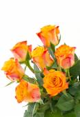 Yellow with red roses isolated — Stock Photo