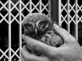 Big owl eyes — Stock Photo